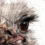 ostrich 1 eye cropped
