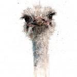 ostrich 1 lighter
