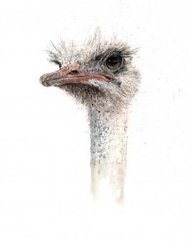 ostrich 2 lighter