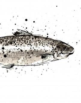 salmon scan crop