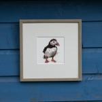 seabirds puffin sarah d pic