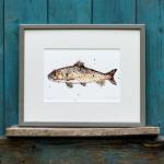 trout frame sarah d