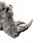zaza-rhino copy lower res1
