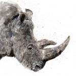 zaza-rhino copy lower res1 crop