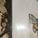 buzzing 6