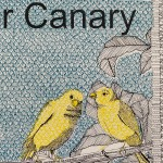 C is for Canary 4