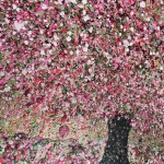 Everlastin Cherry Blossom, Nicky Chubb close 2