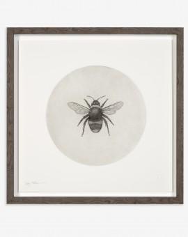 Guy Allen_Bumblebee_50x50cm framed copy