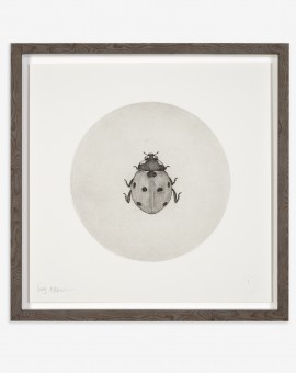 Guy Allen_Ladybird_50x50cm framed copy