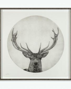Guy Allen_Moon Stag_6 of 75_99x99cm framed 2