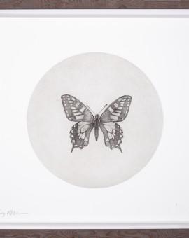 Guy_Allen_ButterflyB