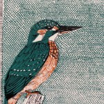 K is for Kingfisher 4