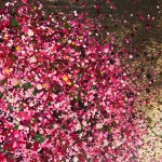 Pink Cherry Blossom Forever close 2