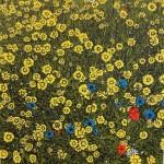 Summer Wildflower Clare Halifax
