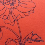 Ellen Williams Anemone I Wychwood Art close up flower