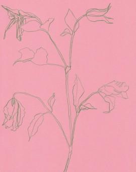 Ellen Williams Clematis I Wychwood Art