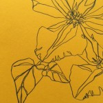 Ellen Williams Clematis III Wychwood Art close up flower
