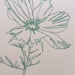 Ellen Williams Cosmos I Wychwood Art close up flower