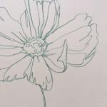 Ellen Williams Cosmos III Wychwood Art close up flower