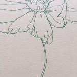 Ellen Williams Cosmos III Wychwood Art close up stem