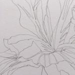 Ellen Williams Iris I Wychwood Art close up flower