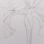 Ellen Williams Iris I Wychwood Art close up stem