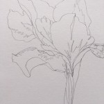 Ellen Williams Iris II Wychwood Art close up stem