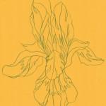 Ellen Williams Iris VIII Wychwood Art