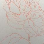 Ellen Williams Peony I Wychwood Art close up flower
