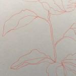 Ellen Williams Peony I Wychwood Art close up stem