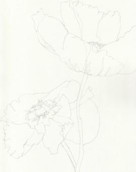 Ellen Williams Poppy I Wychwood Art
