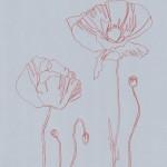 Ellen Williams Poppy II Wychwood Art