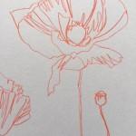 Ellen Williams Poppy II Wychwood Art close up flower