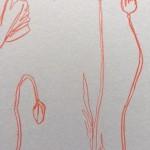 Ellen Williams Poppy II Wychwood Art close up stem