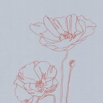 Ellen Williams Poppy III Wychwood Art