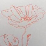 Ellen Williams Poppy III Wychwood Art close up flower