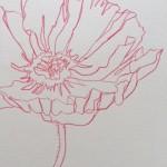 Ellen Williams Poppy IIV Wychwod Art close up flower