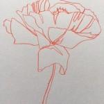 Ellen Williams Poppy IV Wychwood Art close up flower