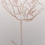 Ellen Williams Poppy V Wychwood Art close up flower