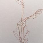 Ellen Williams Poppy V Wychwood Art close up stem