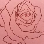 Ellen Williams Rose IX Wychwood Art close up flower