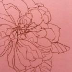 Ellen Williams Rose VII Wychwood Art close up flower