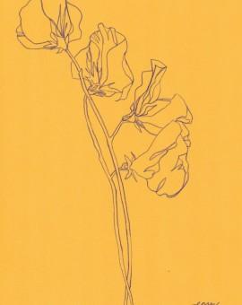 Ellen Williams Sweet Pea I Wychwood Art