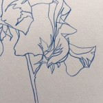 Ellen Williams Sweet Pea III Wychwood Art close up flower