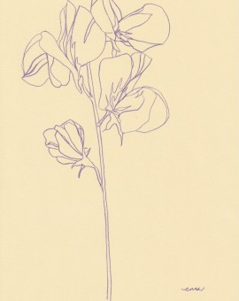 Ellen Williams Sweet Pea V Wychwood Art