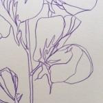 Ellen Williams Sweet Pea V Wychwood Art close up flower