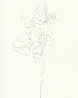 Ellen Williams Sweet Pea VI Wychwood Art