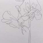 Ellen Williams Sweet Pea VI Wychwood Art close up