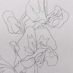 Ellen Williams Sweet Pea VI Wychwood Art close up botanical