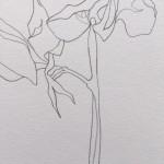 Ellen Williams Sweet Pea VI Wychwood Art close up flower